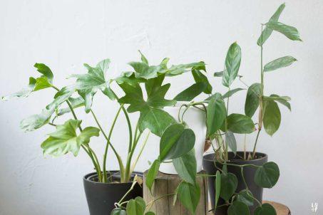 Regar plantas de forma sustentable